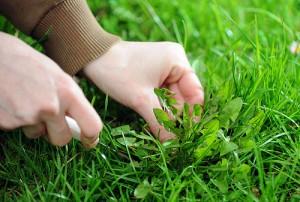 tips-para-controlar-las-malas-hierbas-03