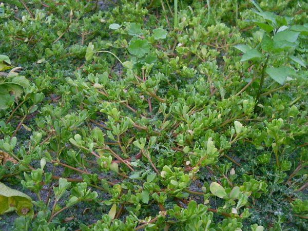 tips-para-controlar-las-malas-hierbas-04