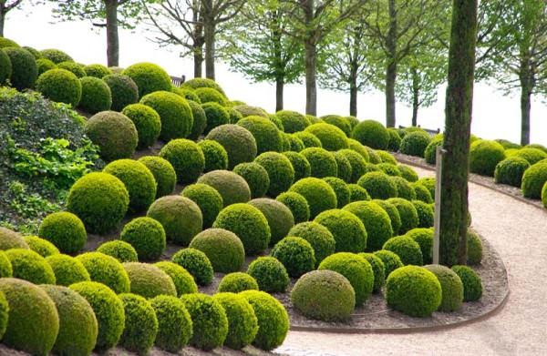 decora-tu-jardin-con-topiarios-01