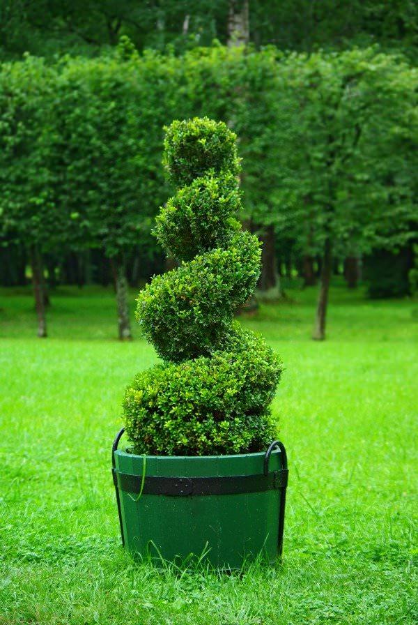 Decora tu jard n con topiarios for Decora tu jardin