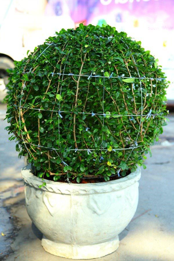decora-tu-jardin-con-topiarios-03