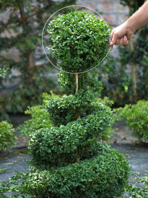 decora-tu-jardin-con-topiarios-04