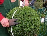 imagen Decora tu jardín con topiarios
