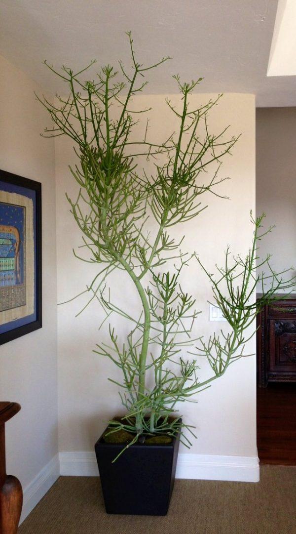 Las 14 mejores suculentas de interior for Cactus cuidados interior