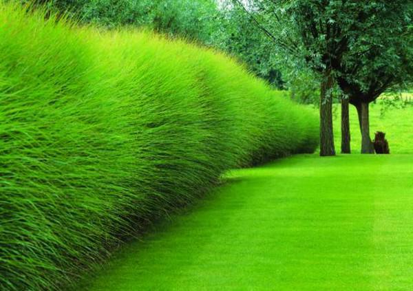 mejora-la-privacidad-de-tu-jardin-con-plantas-01