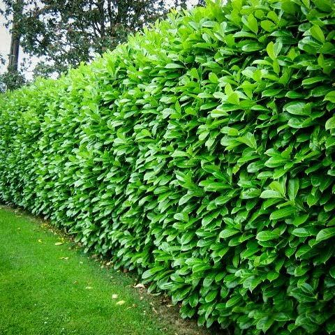 mejora-la-privacidad-de-tu-jardin-con-plantas-02