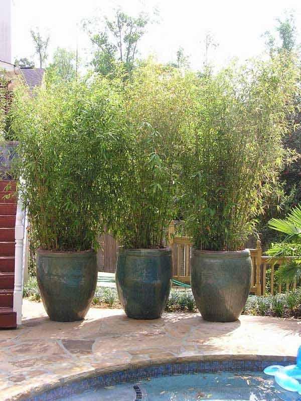 mejora-la-privacidad-de-tu-jardin-con-plantas-03