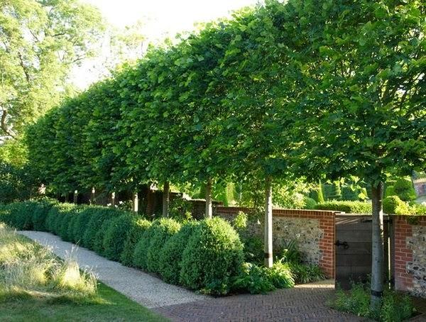 mejora-la-privacidad-de-tu-jardin-con-plantas-05