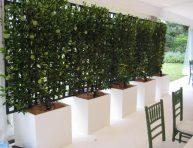 imagen Mejora la privacidad de tu jardín con plantas