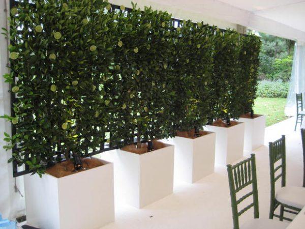 mejora-la-privacidad-de-tu-jardin-con-plantas-06