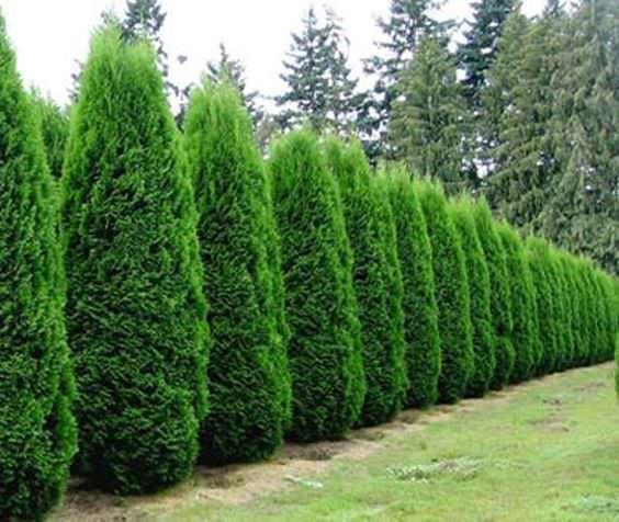 mejora-la-privacidad-de-tu-jardin-con-plantas-07
