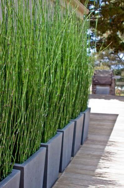 mejora-la-privacidad-de-tu-jardin-con-plantas-08