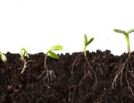imagen Cómo hacer el mejor sustrato para nuestros semilleros