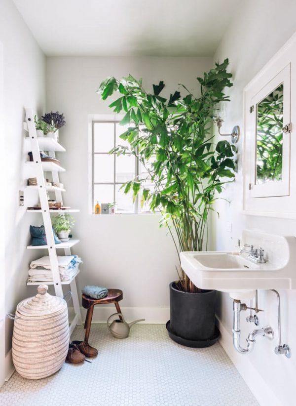 10 rboles que se pueden cultivar en interior - Plantas grandes para interiores ...