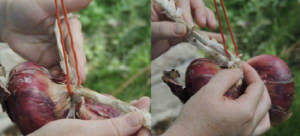 como-trenzar-cebollas-para-guardar-021