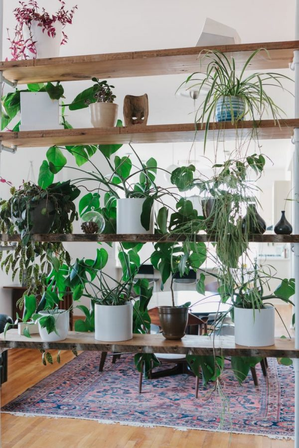 Propuestas para crear un jard n vertical for Plantas recomendadas para jardin vertical