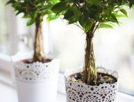 imagen Consejos para cultivar ficus en interior