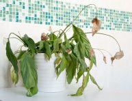 imagen Evita estos 9 errores y tus plantas te lo agradecerán