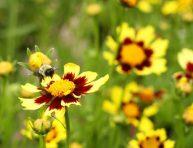 imagen Haz que las abejas acudan a tu jardín