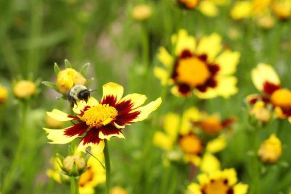 Haz que las abejas acudan a tu jard n for Ahuyentar abejas jardin