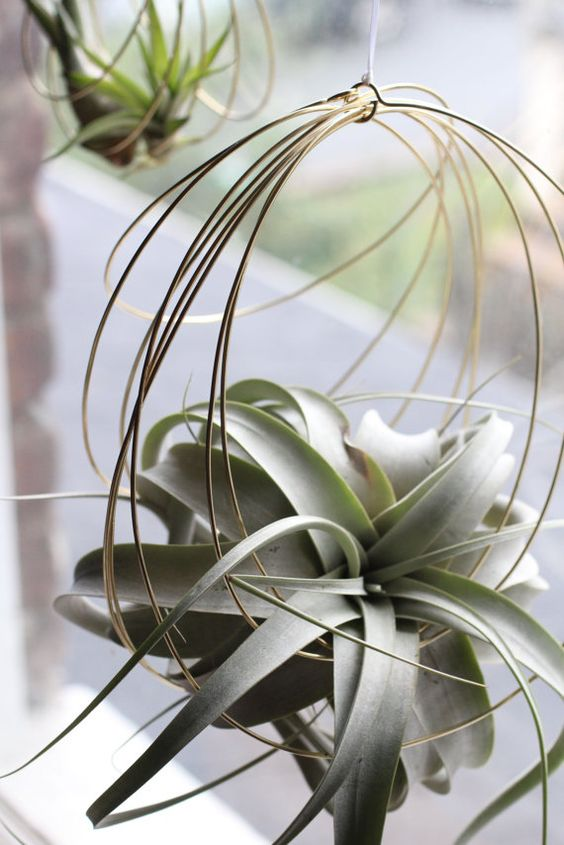 Ideas para lucir mejor tus plantas a reas for Air plant holder ideas