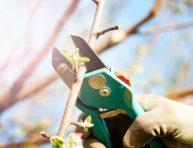 imagen 10 falsos mitos de jardinería y horticultura