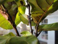 imagen 7 secretos para salvar una planta de una helada leve