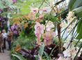 imagen Algunos secretos para tener éxito con las orquídeas