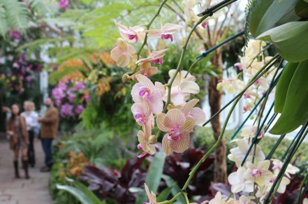 Some secrets to have success with orchids 2