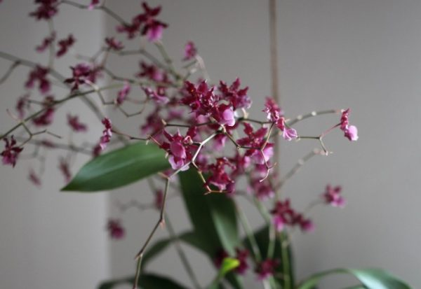 Some secrets to have success with orchids 6