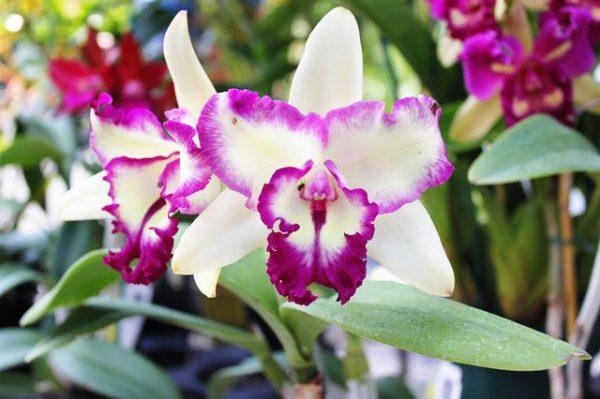 Fertilizers homemade orchid 1