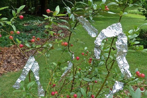 usos del papel de aluminio 3