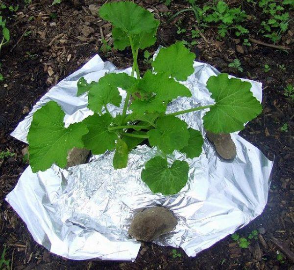 7 ingeniosos usos del papel aluminio en jardinería