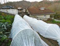 imagen Cómo construir un túnel de cultivo