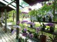 imagen Consejos sobre el cultivo y cuidados de las orquídeas