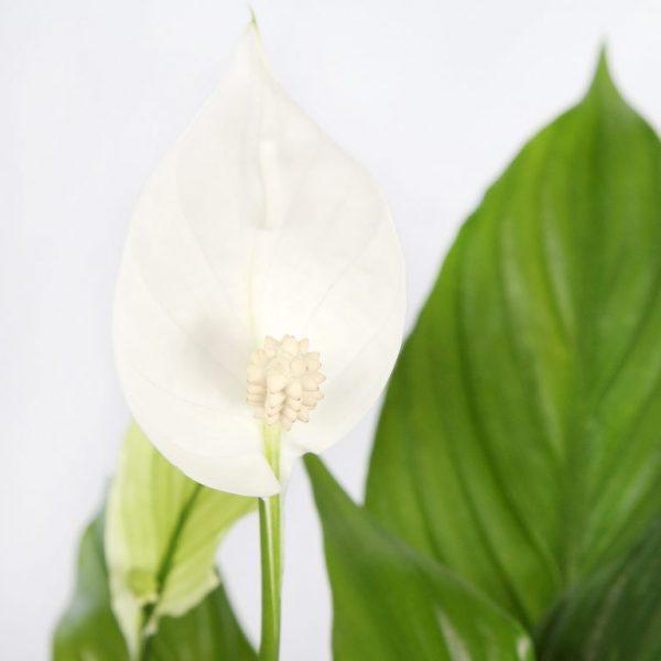 Plantas para la oficina que aumentar n tu productividad for Plantas decorativas para oficina