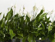 imagen 5 plantas que absorben humedad ambiental