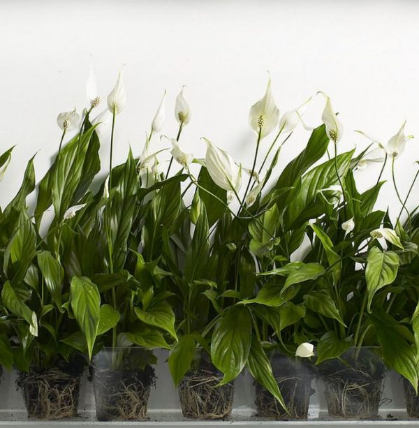 5 plants that absorb moisture from the environment 1