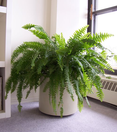Tree Inside The House Interior Climate Controlled: 5 Plantas Que Absorben Humedad Ambiental