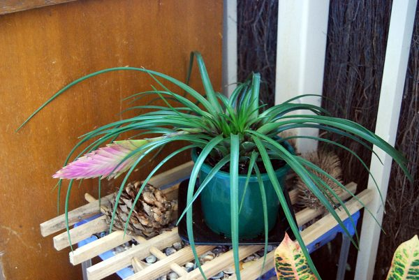 5 plants that absorb moisture from the environment 5