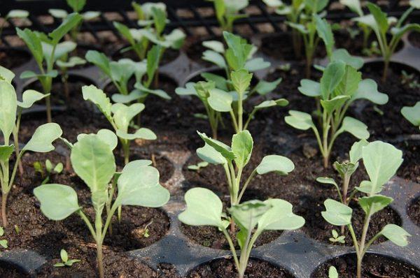 6 uses of cinnamon in gardening 1