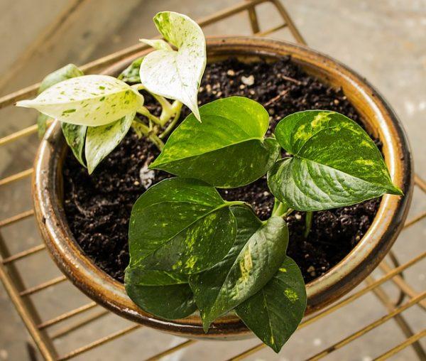 6 uses of cinnamon in gardening 6