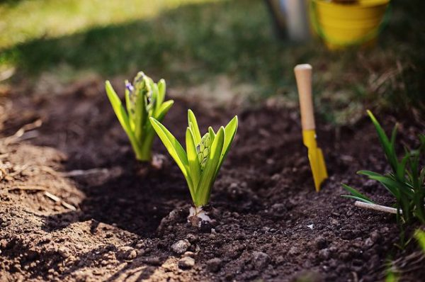 Things to do in the spring to have a perfect garden 6