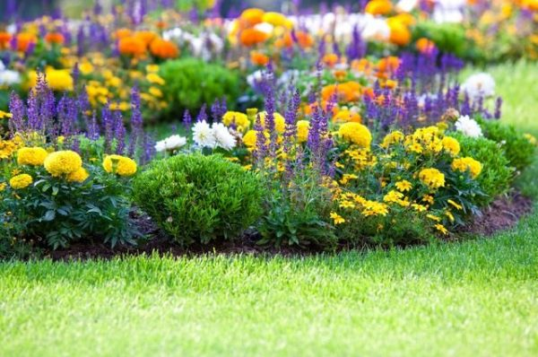 Things to do in the spring to have a perfect garden 9