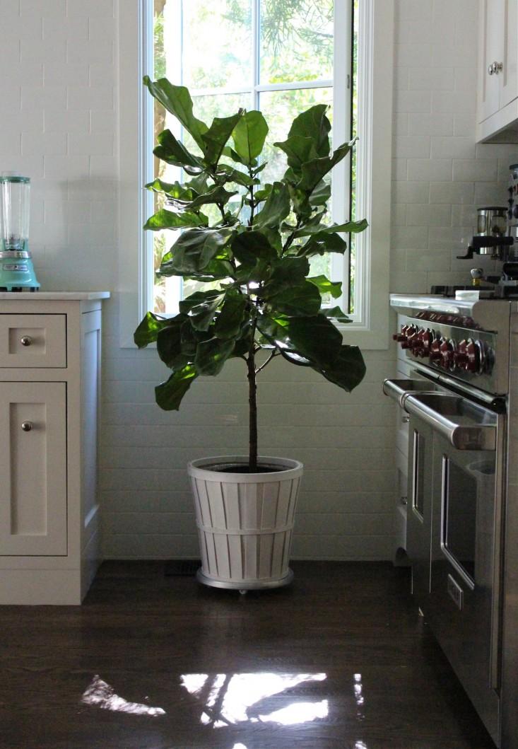 11 cuidados invernales para tus plantas de interior for Plantas de interior duraderas