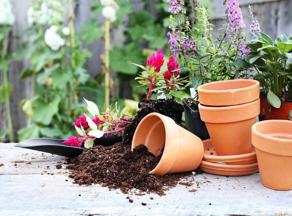 4 tips on the soil of the pots 1