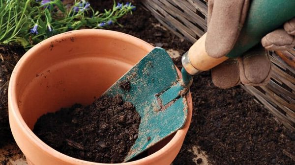 4 tips on the soil of the pots 2