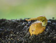 imagen 8 problemas muy comunes en tu semillero