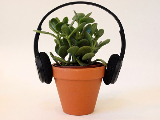 Effects of music on the growth of the plants 1