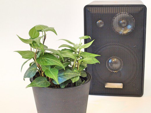 Effects of music on the growth of the plants 2